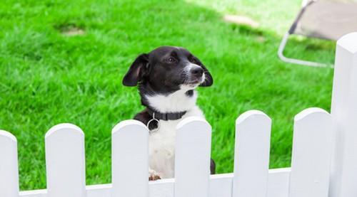 Hund hinter Zaun im Ferienhaus-Garten