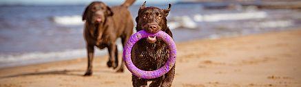 Hunde am Bretagne Strand